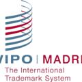 Международная защита интеллектуальной собственности