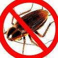 Уничтожение клопов, тараканов, блох, и других бытовых насекомых